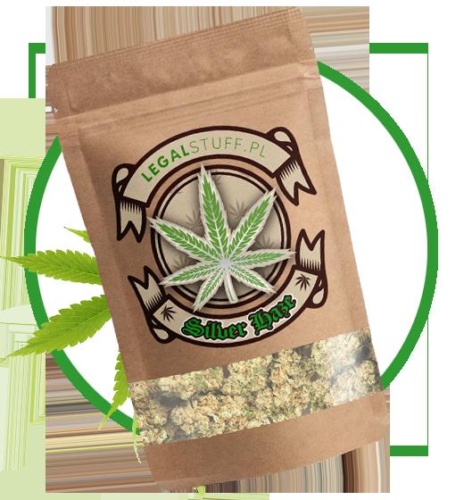 Cannabis-Sativa-silver-haze